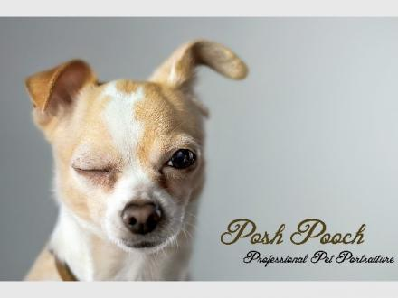 Posh Pooch Pet Photography