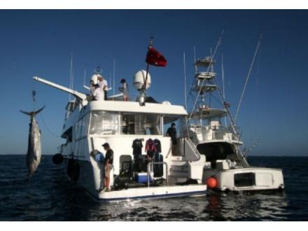 Ross Finlayson Marlin Fishing Charters