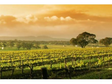 Sublime Wine - Wineries Australia