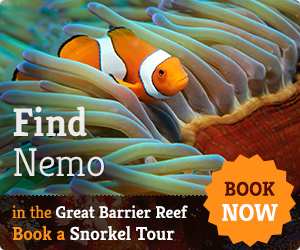 Find Nemo Great Barrier Reef